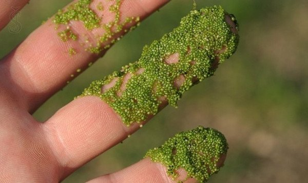Những loài thực vật độc đáo trên trái đất