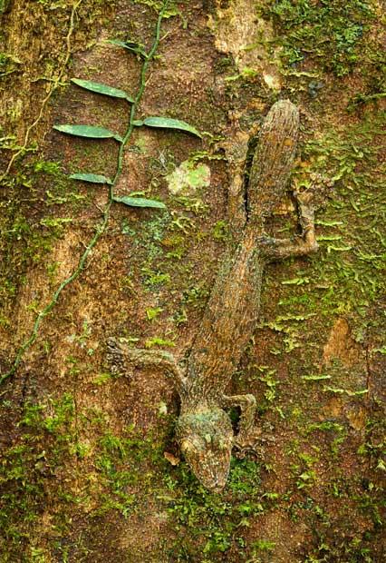 Những màn ngụy trang tài tình trong thiên nhiên