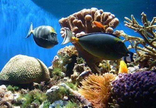 Những phát hiện khoa học kỳ thú ở vùng Vịnh Mexico