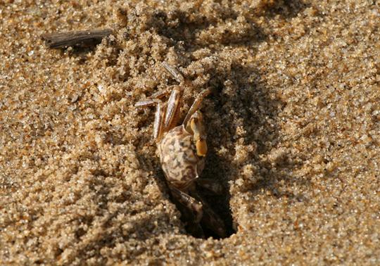 Những sinh vật đời cát