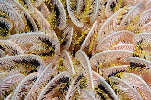 Những sinh vật kỳ lạ dưới đáy biển Indonesia