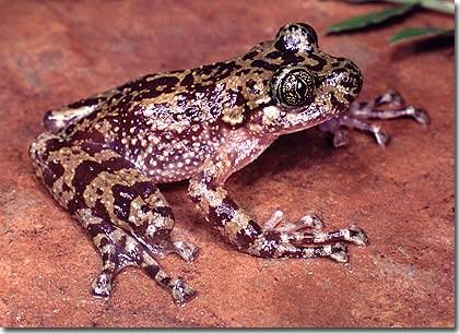 Những sinh vật kỳ lạ nhất thế giới ngày càng trở nên khác thường