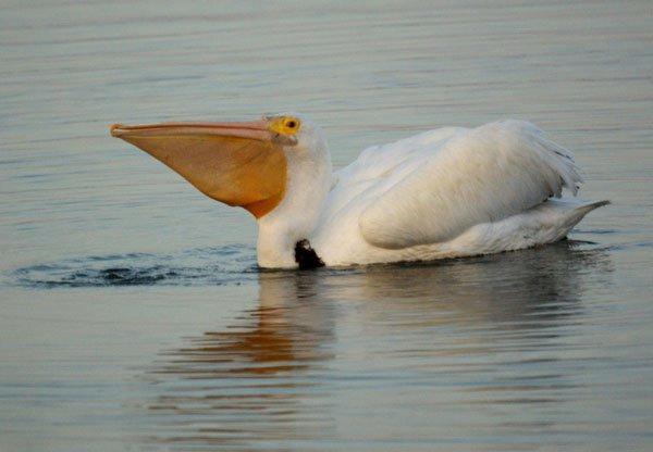 Những sự thật thú vị về loài chim khổng lồ