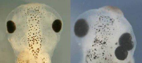 Những thí nghiệm gene kỳ quái
