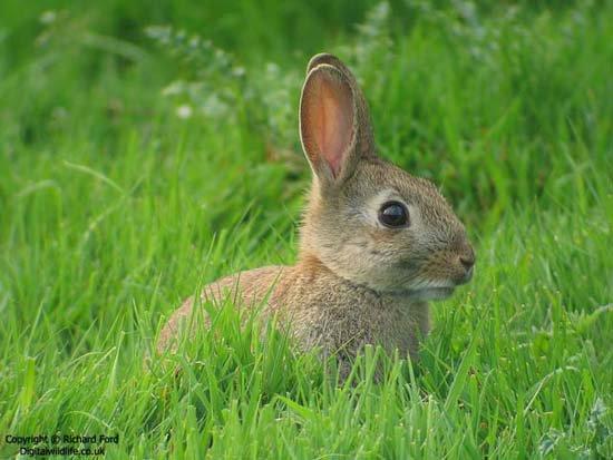 Nỗi lo cho loài thỏ trước Tết