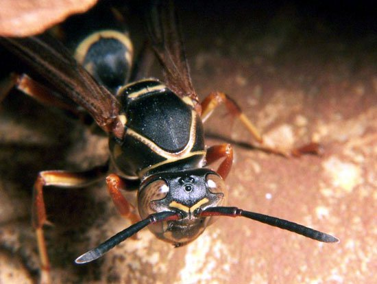 Ong vò vẽ không chấp nhận kẻ gian trá