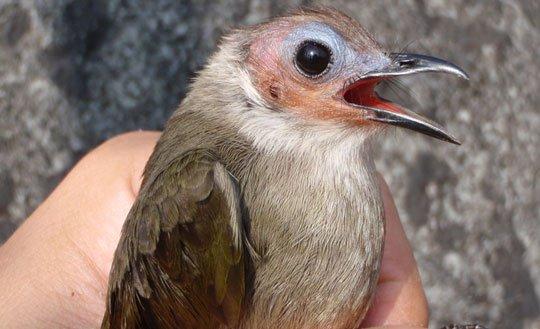 Phát hiện 3 loài động vật mới ở Việt Nam