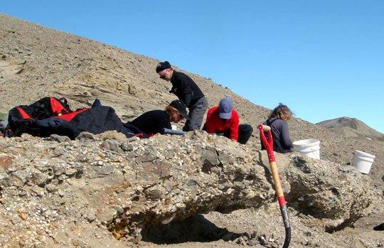 Phát hiện hóa thạch rùa 45 triệu năm ở Nam Cực