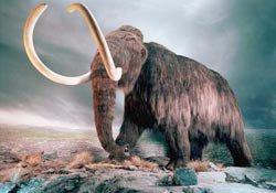 Phát hiện hóa thạch xương voi Mamút ở Mêhicô