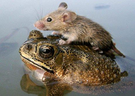 Phát hiện hơn 200 loại sinh vật chuột và ếch mới