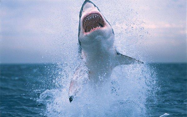 Phát hiện kinh ngạc về đời sống tình dục của những sát thủ đại dương