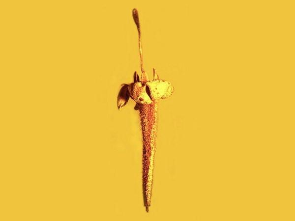 Phát hiện mẫu hóa thạch hoa cúc đầu tiên chứa nhiều độc tính