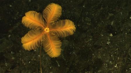 Phát hiện nhiều sinh vật mới ở vùng biển Indonesia