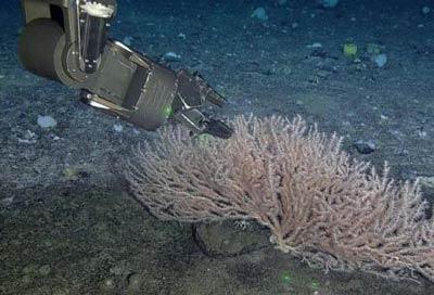 Phát hiện những sinh vật mới dưới lòng Đại Tây Dương
