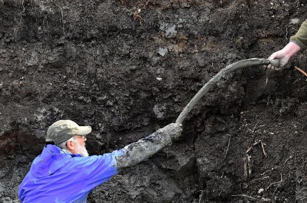 Phát hiện xương voi ma mút lông xoăn tại cánh đồng trồng đậu nành