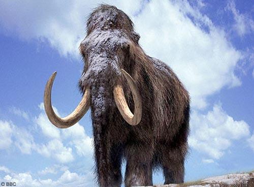 Phục sinh loài voi mamút cổ bằng nhân bản vô tính