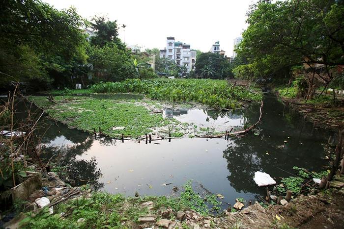 Rác thải và sinh vật phơi bụng trên mặt hồ Hà Nội
