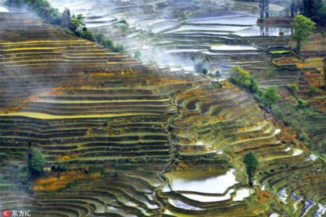 Ruộng bậc thang đầy màu sắc lạ ở Vân Nam