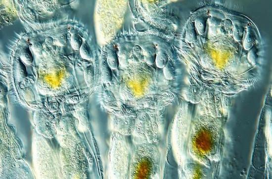 Sắc màu cuộc sống khó tin dưới khung kính hiển vi