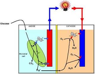 Sản xuất tế bào nhiên liệu năng lượng cao từ bò