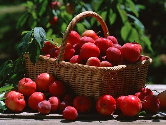 Sáu tác dụng tuyệt vời cho sức khỏe của trái táo