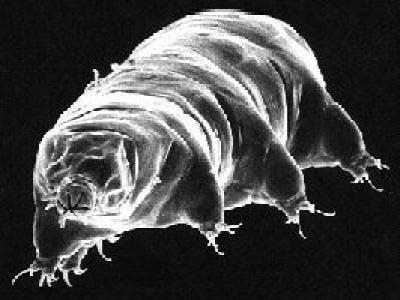 Sinh vật không cần bảo vệ vẫn sống sót được trong vũ trụ