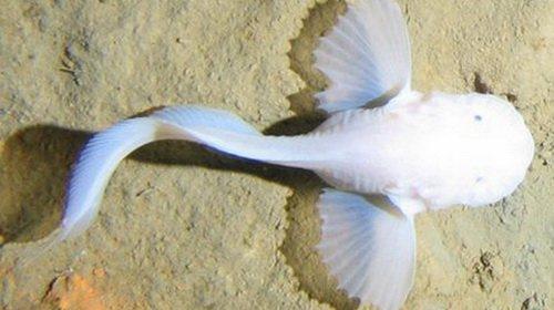 Sự sống nơi rãnh sâu nhất đại dương