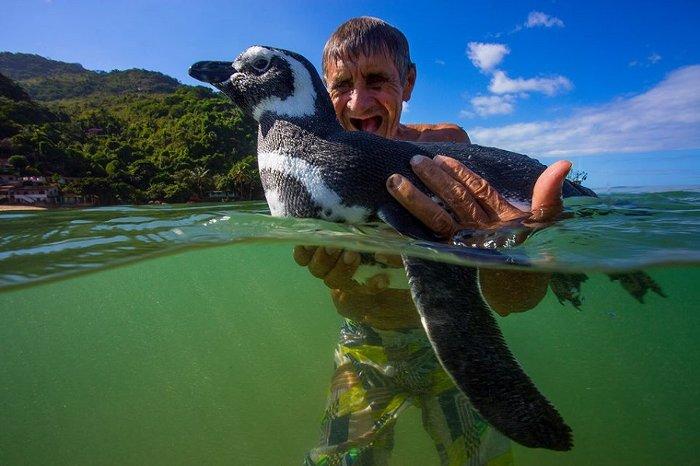 Sự thật phía sau câu chuyện Chú chim cánh cụt vượt 8.000km mỗi năm để về thăm ân nhân