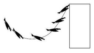 Sự thật về khả năng bay lượn của Người Dơi
