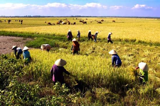Tác động của biến đổi khí hậu trên vựa lúa: Không nên bi quan