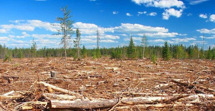 Tác động của con người đến thiên nhiên đang giảm dần