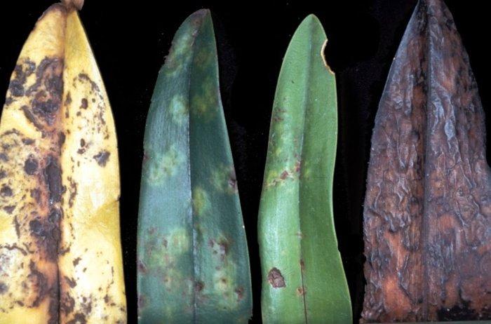 Tác dụng không ngờ của virus thực vật