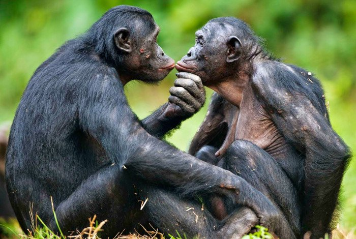 Tại sao sinh vật lại cần phải giao phối?