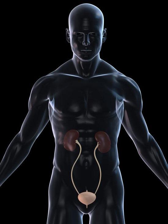 Tái tạo ống tiết niệu từ tế bào bệnh nhân
