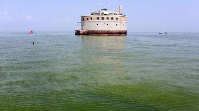 Tảo độc tấn công bờ biển Mỹ