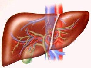 Tế bào da có thể thay thế chữa các bệnh về gan