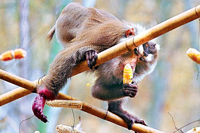 Thảm hoạ gia đình khỉ