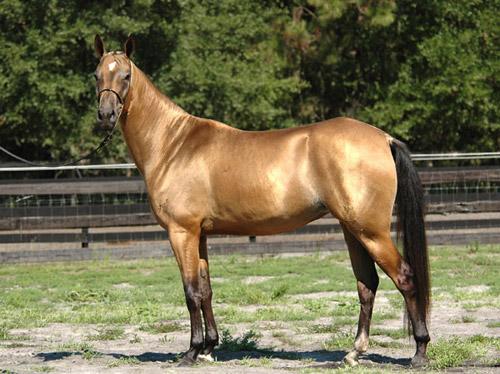Thấy dấu vết của loài ngựa có mồ hôi đỏ như máu