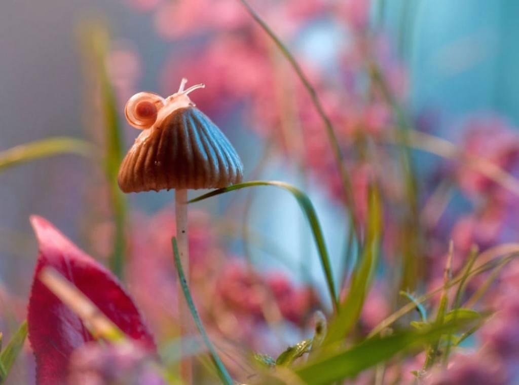 Thế giới côn trùng lung linh huyền ảo