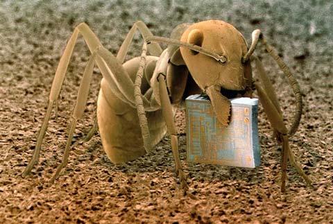 Thế giới qua lăng kính hiển vi điện tử