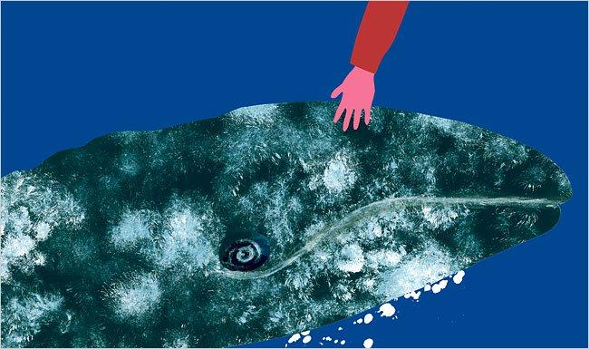Theo dấu loài cá voi – Bí ẩn chưa có lời giải đáp (Phần 3)