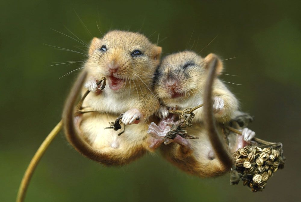 Thích thú với loạt ảnh tình yêu của động vật