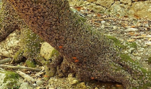 Thung lũng bướm trên đảo Rhodes