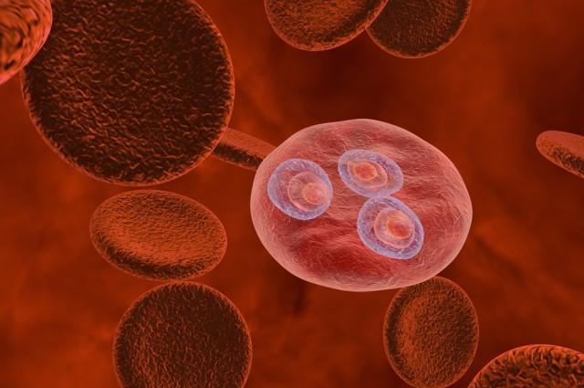 Tiến hành thử nghiệm vaccine đặc trị sốt rét ở người