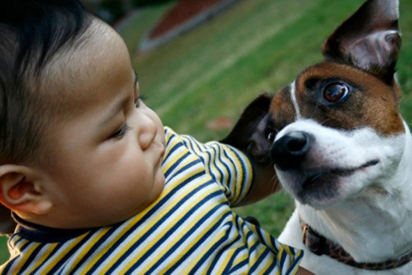 Tiếp xúc với chó giúp trẻ giảm nguy cơ bệnh hen suyễn
