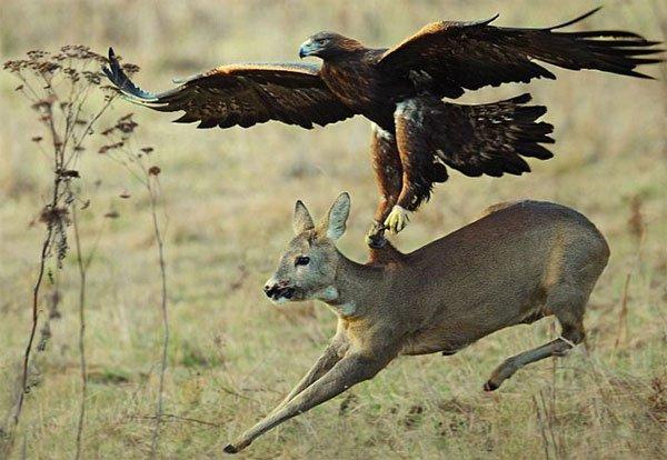 """Tìm hiểu loài chim ăn thịt khổng lồ mệnh danh """"chúa tể bầu trời"""""""