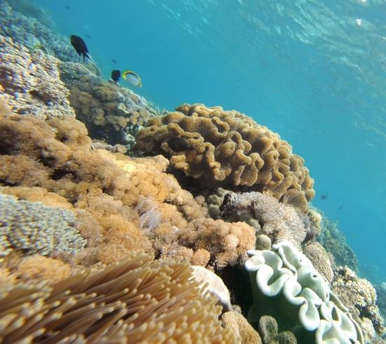Tìm kiếm kháng sinh mới dưới lòng đại dương