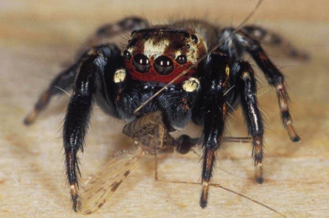 Tìm thấy khắc tinh tự nhiên của muỗi hút máu người