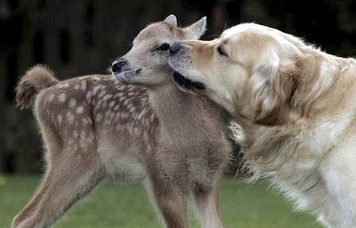 Tình bạn kì lạ của những loài động vật không đội trời chung