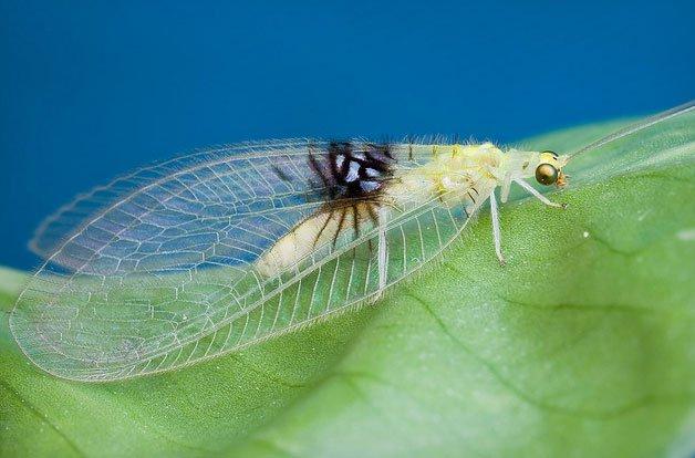 Tình cờ phát hiện ra loại côn trùng mới qua Flickr